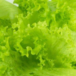 Green Wave Lettuce