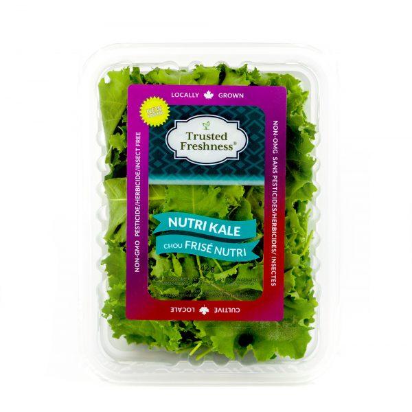 Fresh salad greens and herbs